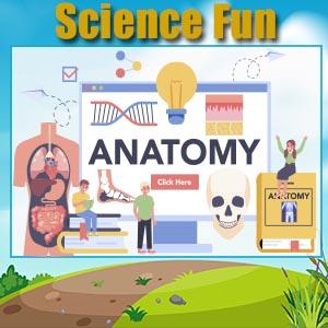 Anatomy Fun