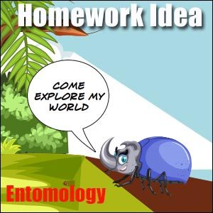 Insects Homework Idea
